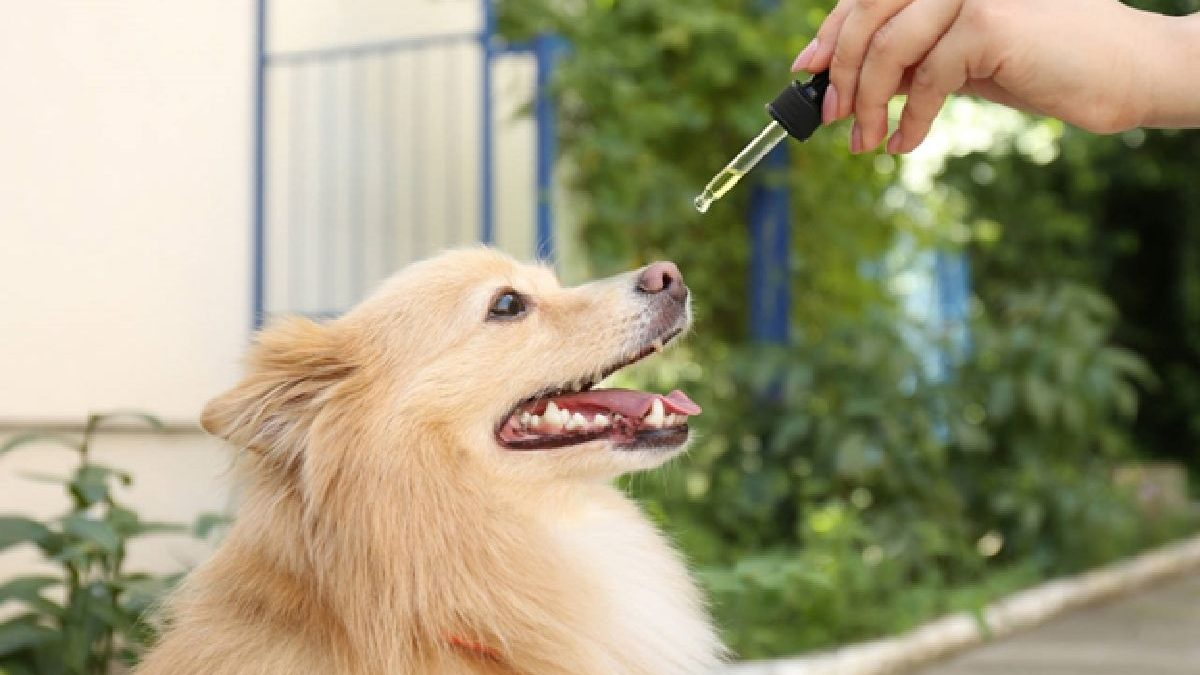 The Benefits of CBD for your Pet